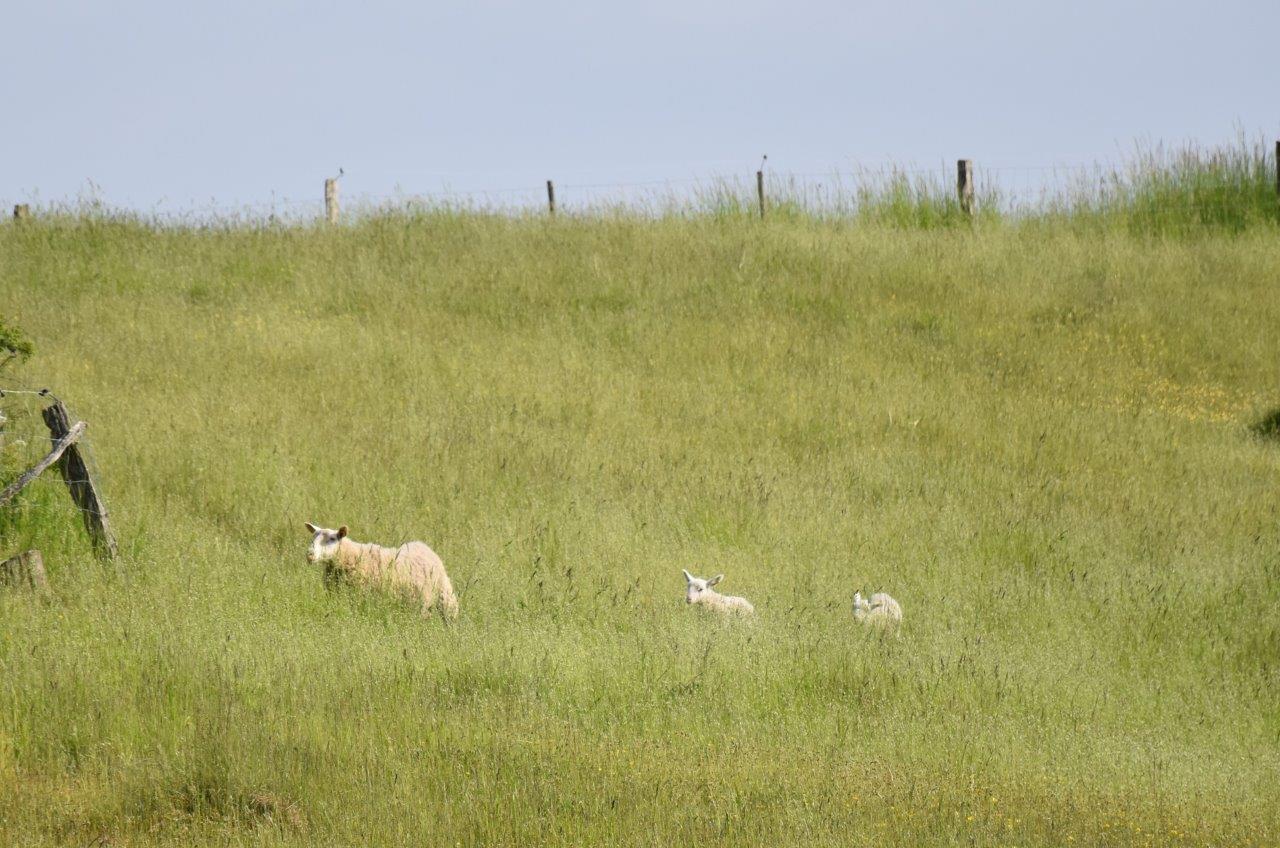 Eller deras får